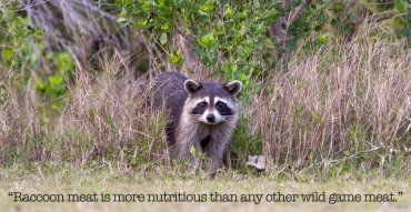 Which Meat Is More Nutritious – Elk, Turkey or Raccoon?