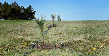 Habitat Improvement: Planting Bare Root Trees